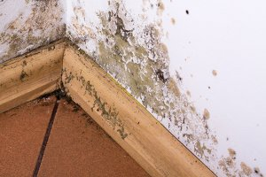 Mold removal remediation dundee mi michigan