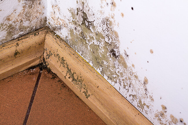 3 Top Places There Could Be Mold In Your Home Mold & Air Quality