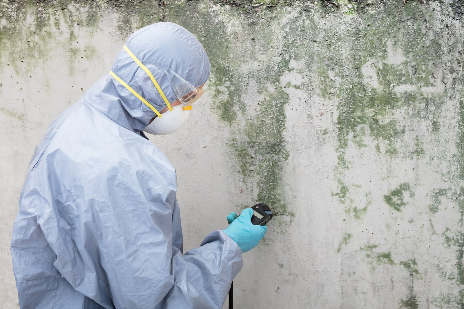 What is the Difference Between Mold Removal and Mold Remediation?