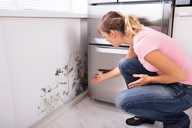 7 Things You Should Know About Mold & Air Quality Professionals