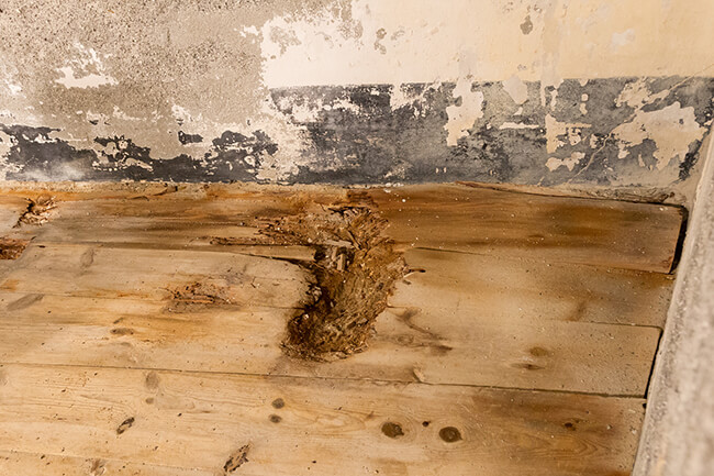 Common Causes of Mold in Your Attic