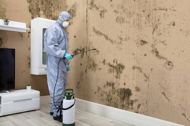 Why You Need a Professional to Remove the Mold