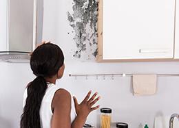 Mold on kitchen Cabinet