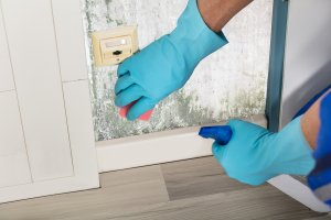 5 Questions To Ask Before Hiring A Mold Remediation Company